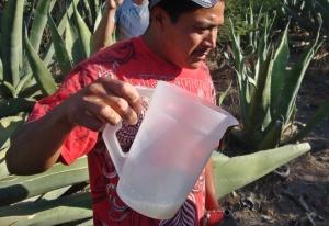 pulque urbino pouring