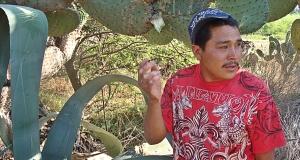 pulque urbino talking