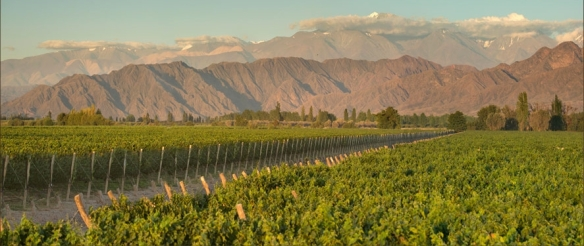 cab vines mountains