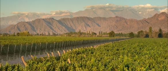 cab vines mountains